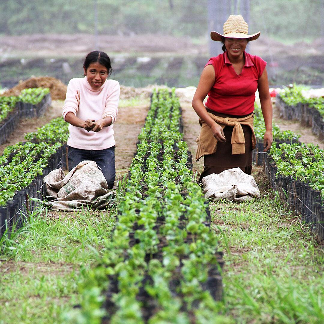 Coffee Farm Loans